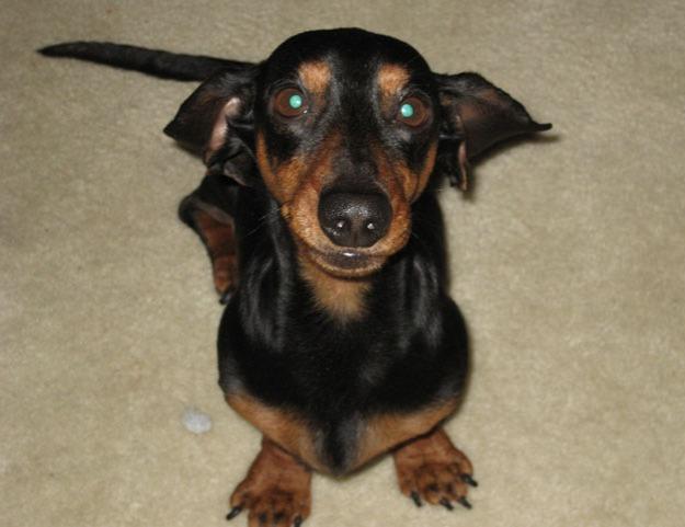 Dog inspiration photo - Talk Sweet to Me